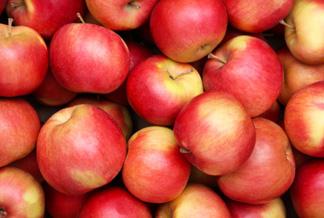 Honey Crisp Apples & 3 Kinds of Plums